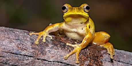 NaturallyGC Secret Life of Frogs tickets
