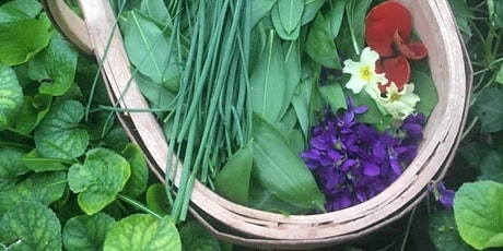 Foraging Fun - Hedgerow, Meadow and Woodland Workshop tickets