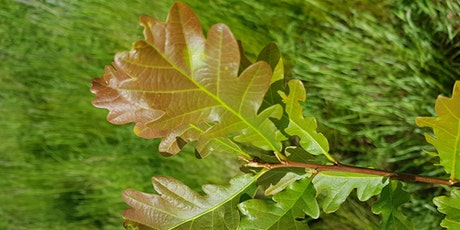 Guided Walk: Tree Identification in the Heart of England Forest tickets