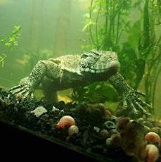 Show Me Reptile & Exotics Show Arkansas entradas