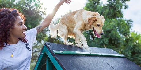 Beginners to Agility - 6 Week Course tickets