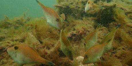 Onkaparinga Shellfish Reef Information Session tickets