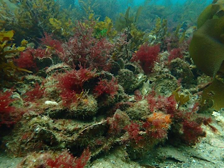 POSTPONED: Onkaparinga Shellfish Reef Information Session image