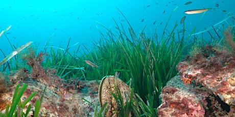 J'ai rendez-vous avec les animaux des petits fonds marins ! billets