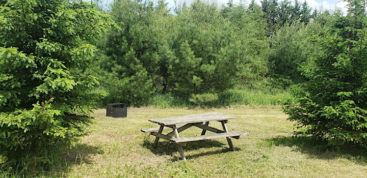 Day Campfire Site image