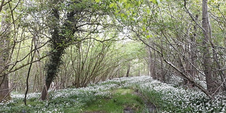 Family Forest School sessions at Hazeland tickets