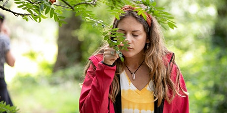 Purbeck Forest Bathing at Wilkswood, Langton Matravers tickets