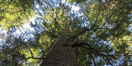 Talking Trees with Talaysay Tours (Online) tickets