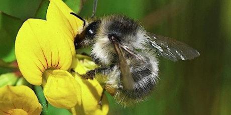 Bee Blitz at Craig Gwladys tickets