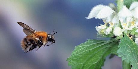 Family-Friendly Pollinator Walk tickets