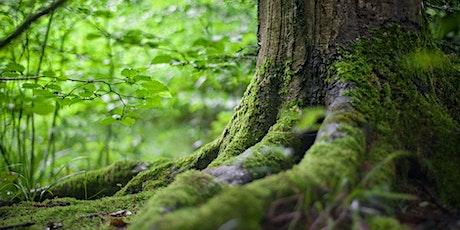Reconnexion Nature chez Chalets Lanaudière tickets