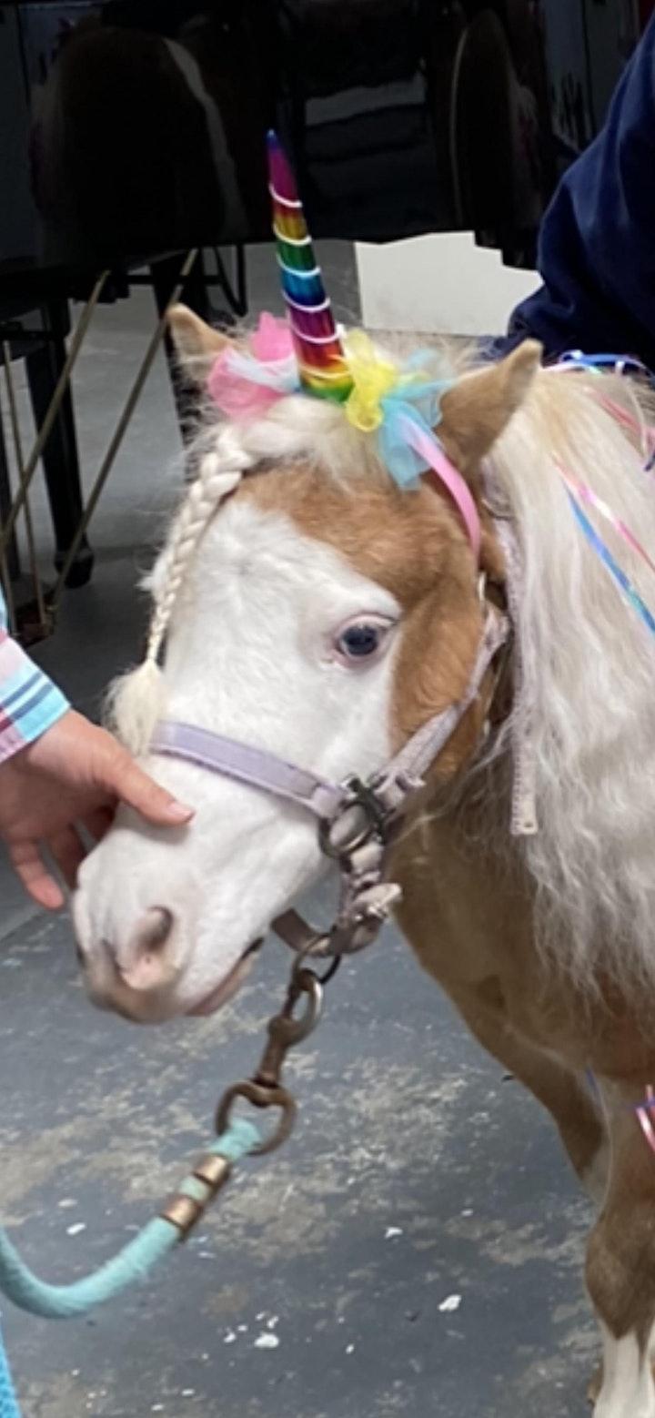 UNICORN Pet and Paint with Mini Horses! image
