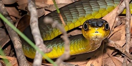 NaturallyGC Fauna of the Coast Reptiles tickets