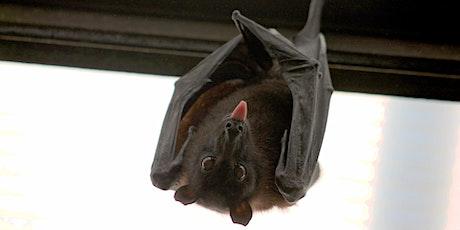 Bat Night Hike tickets