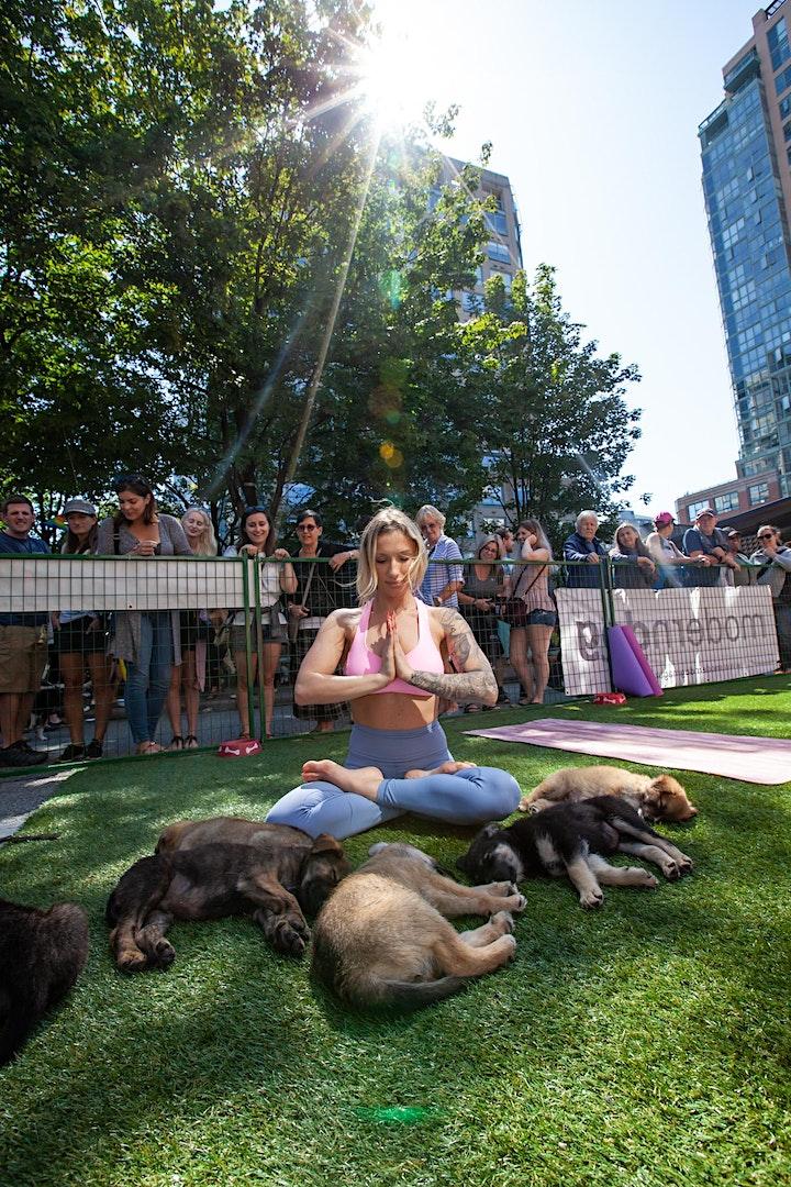 Vancouver Puppy Yoga At Pet-A-Palooza image