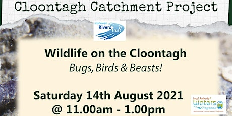 Wildlife on the Cloontagh - Bugs, Birds & Beasts! tickets