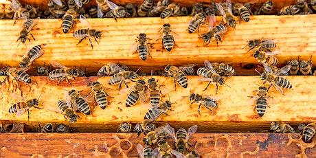 Lake Mac STEAM week:  Children's plant and draw workshop - Bees tickets