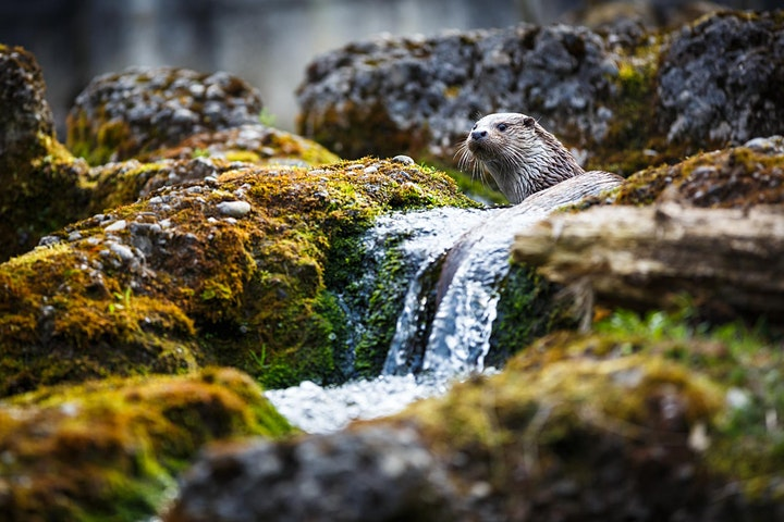 Wildlife on the Cloontagh - Bugs, Birds & Beasts! image