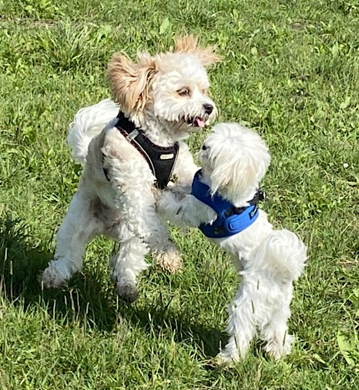 SMALL BREED  PLAY AND SOCIALISATION image