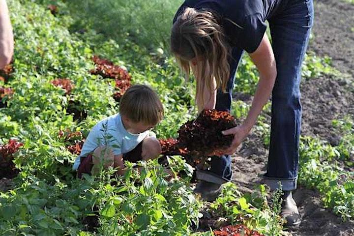 Afbeelding van FOODCAMP Caring Farmers - Zonnegoed ENS