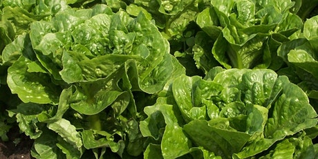 Leafy Vegetable Crops Pest Update tickets