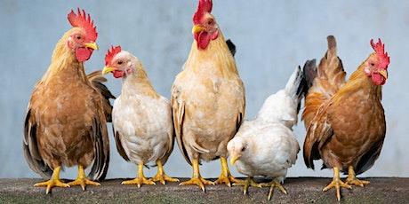 Nourrissage des animaux de la ferme billets