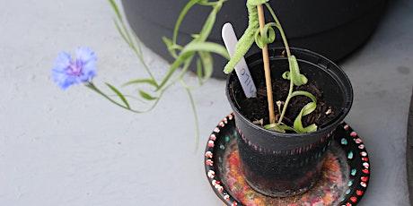 Eginblanhigion // Seedlings tickets