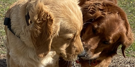 LARGE BREED PLAY AND SOCIALISATION tickets