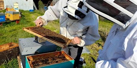 Visite d'une ruche billets