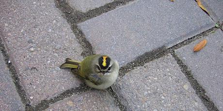 Summer on the Hudson: Birding Tour tickets