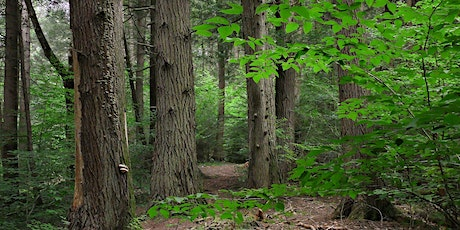 Wild Thing: Lost Forests of New England tickets