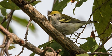 Backyard Bird Identification tickets