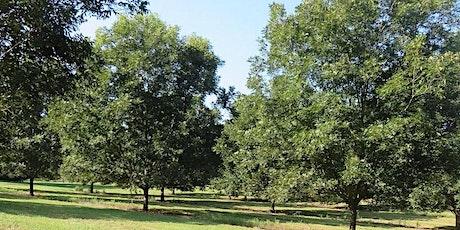 2021 North Carolina Pecan Growers Fall Orchard Tour tickets