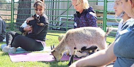 Goat Yoga Texas -  SUPER SUMMER - Sat, Aug 7 @ 10am tickets