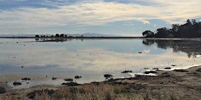 Hamilton Wetlands Stroll