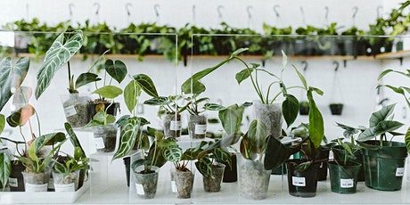 Indoor Plants of Your Dreams IN-PERSON CLASS tickets