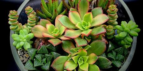 Succulent & Crystal Terrariums @ Luki Brewing tickets