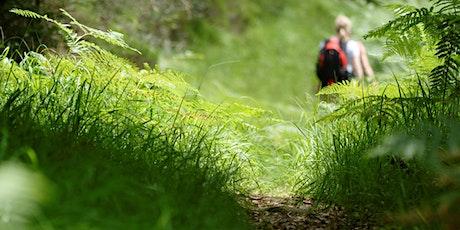 A la découverte des chauves-souris forestières! billets