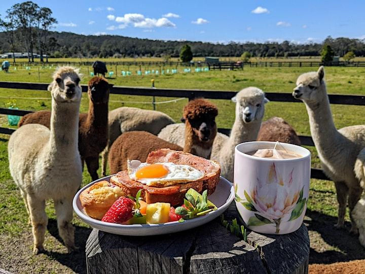 Breakfast with Alpacas image