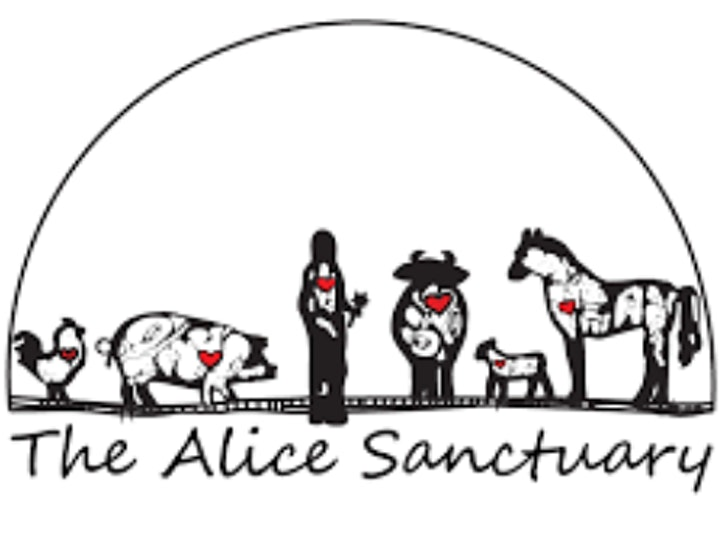 Paint Day At The Alice Sanctuary image