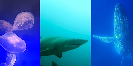 Into the Depths of the Fascinating World of Whales, Sharks and Jellyfish tickets