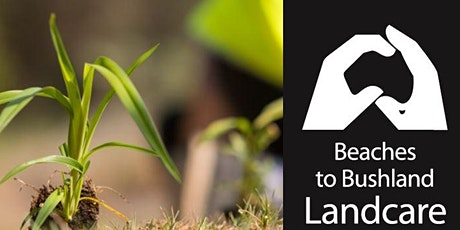 Hinterland Regional Park Bushcare Group- Tree planting tickets