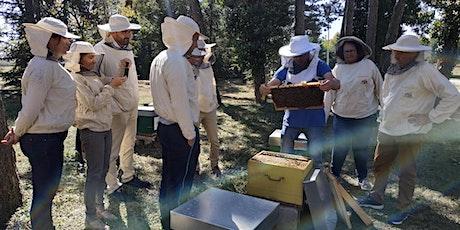 Le rucher inter-entreprises du PIPA vous ouvre à nouveau ses portes ! billets