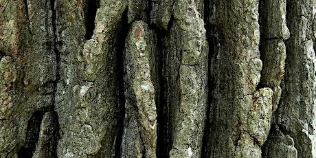 Tree Bark Rubbing - Summer Reading Challenge event tickets