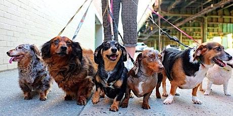 Woef Walk: Hondenwandeling Latem Kermis billets