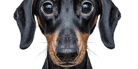 Animal Welfare Event - Kensington Gardens tickets