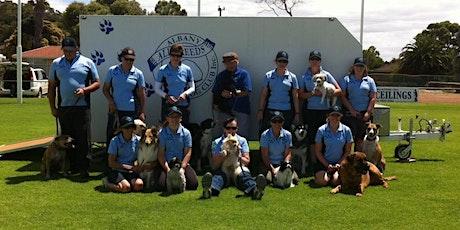 Albany All Breeds Dog Club -  Pet Dog Skills Level 3 - Round Four tickets