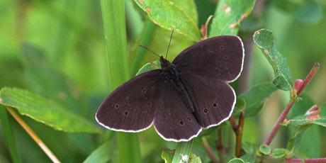 Guided butterfly and wildflower walk on Dollypers Hill nature reserve tickets
