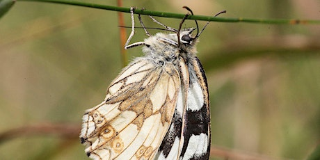 Guided butterfly and wildflower walk on Saltbox Hill nature reserve tickets