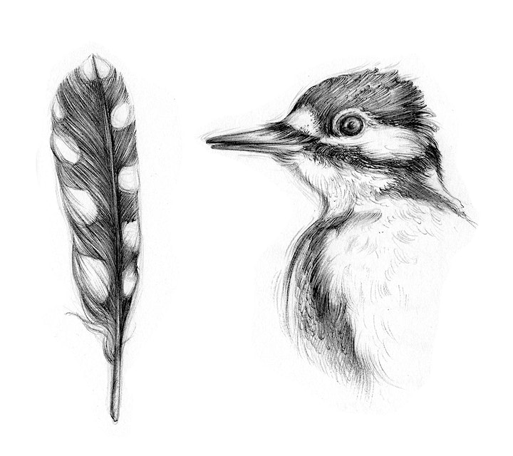 Wildlife Art with Aga Grandowiscz and Athy Library (For Heritage Week) image